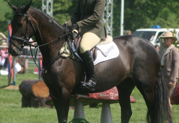Burghley Young Event Horse Championships 11th Place