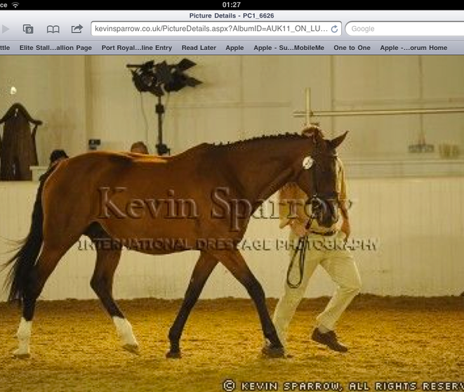 Foal Grading Arena Uk, Aged 19