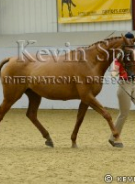 On Fire with On Call at BEF Futurity