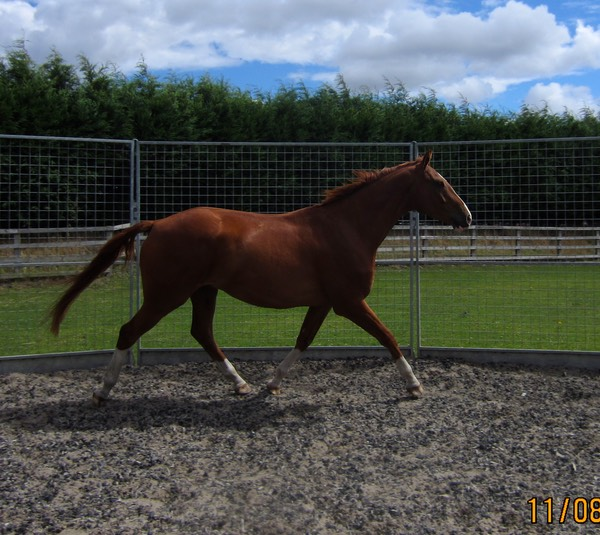 Trot Right Rein